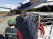 Desde región de Los Lagos partió a Ecuador primer embarque aéreo de ganado vivo