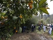 SAG realizó exitoso simulacro de campaña de Mosca de la Fruta en Región de O'Higgins