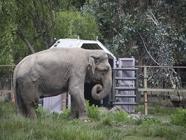 SAG INFORMA: Ramba rumbo al santuario de elefantes en Brasil